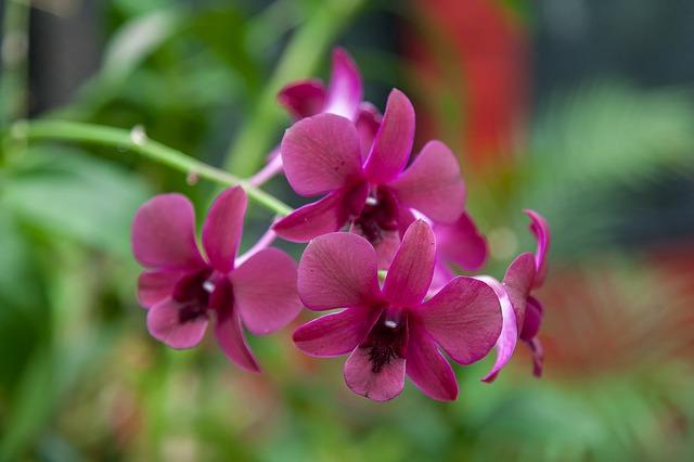 hoa lan hồ điệp 4