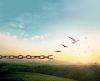 Lição 5 - Libertos do Pecado para uma Nova Vida em Cristo