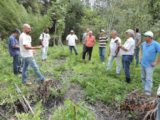 Projeto leva agroflorestas a diversos municípios do Vale do Ribeira