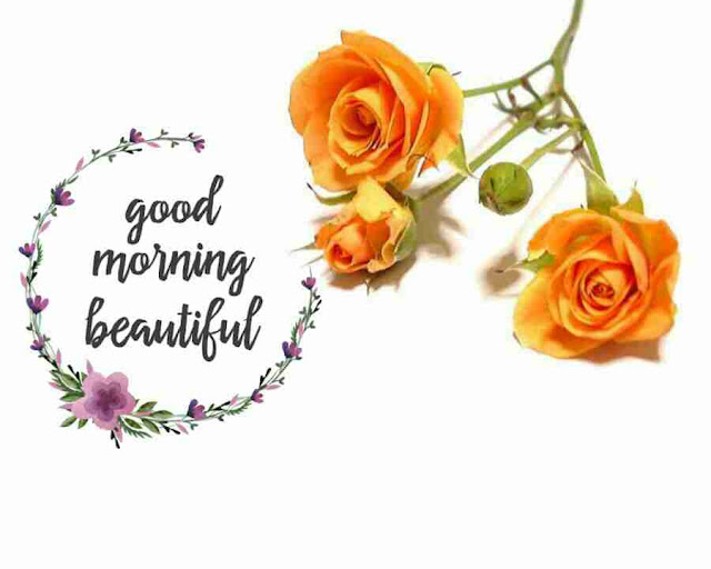 Awesome good morning image with yellow rose flower have a good day
