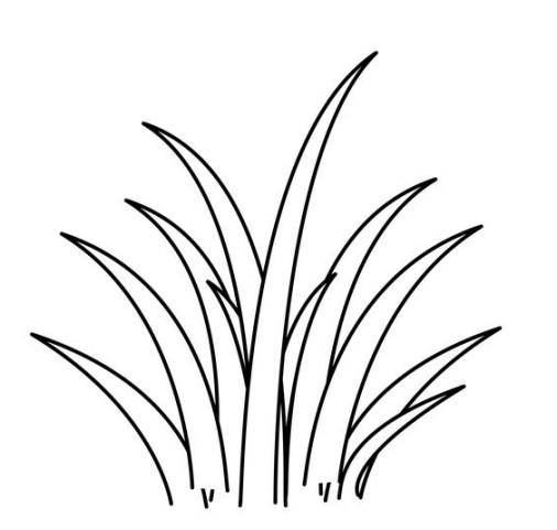 Gambar  Mewarnai Rumput  Terbaru gambarcoloring