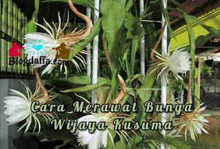 Cara merawat bunga Wijayakusuma