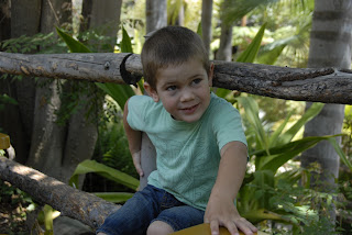 Grandson in Rain Forest: LadyD Books