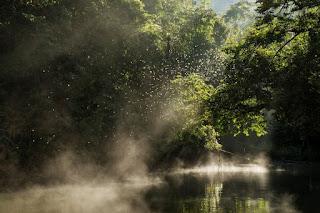 Mata Atlântica concentra nove das 12 bacias hidrográficas brasileiras