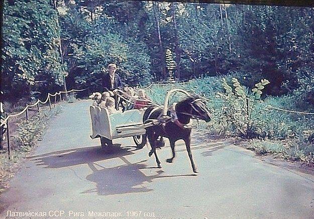 1967 год. Рига. Межапарк.