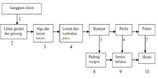 Gambar Skema proses suksesi primer - Sumber: Nuraini, R., dkk. 2015