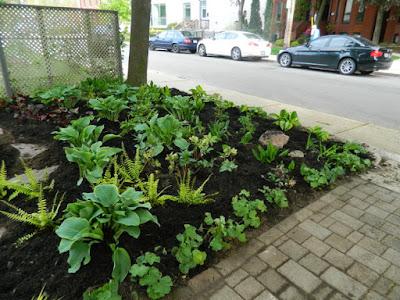 New Summerhill Toronto Front Shade Garden Renovation After by Paul Jung--a Toronto Organic Gardener
