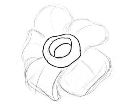 Cara Menggambar Bunga Rafflesia Arnoldi Point Opini Penyedia Point Informasi Terkini
