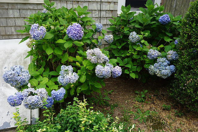 The Doll Sweet Journal Perennial Hydrangeas And New Fences