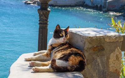 Asal Usul Kucing Aegean
