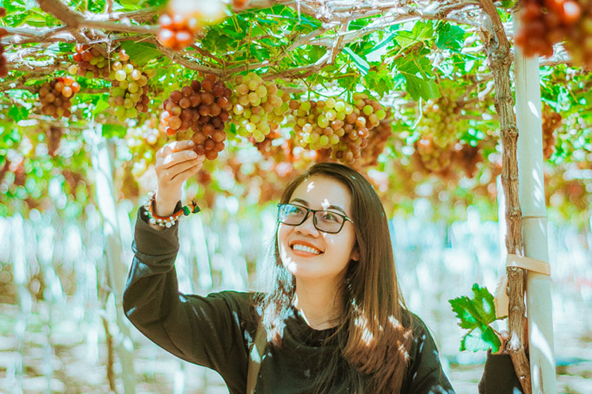 Vườn Nho Thái An Ninh Thuận
