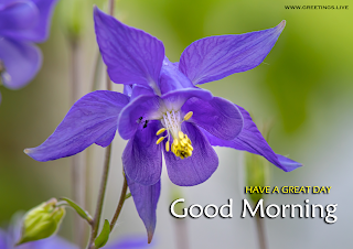 good morning text greetings english nature columbine flower