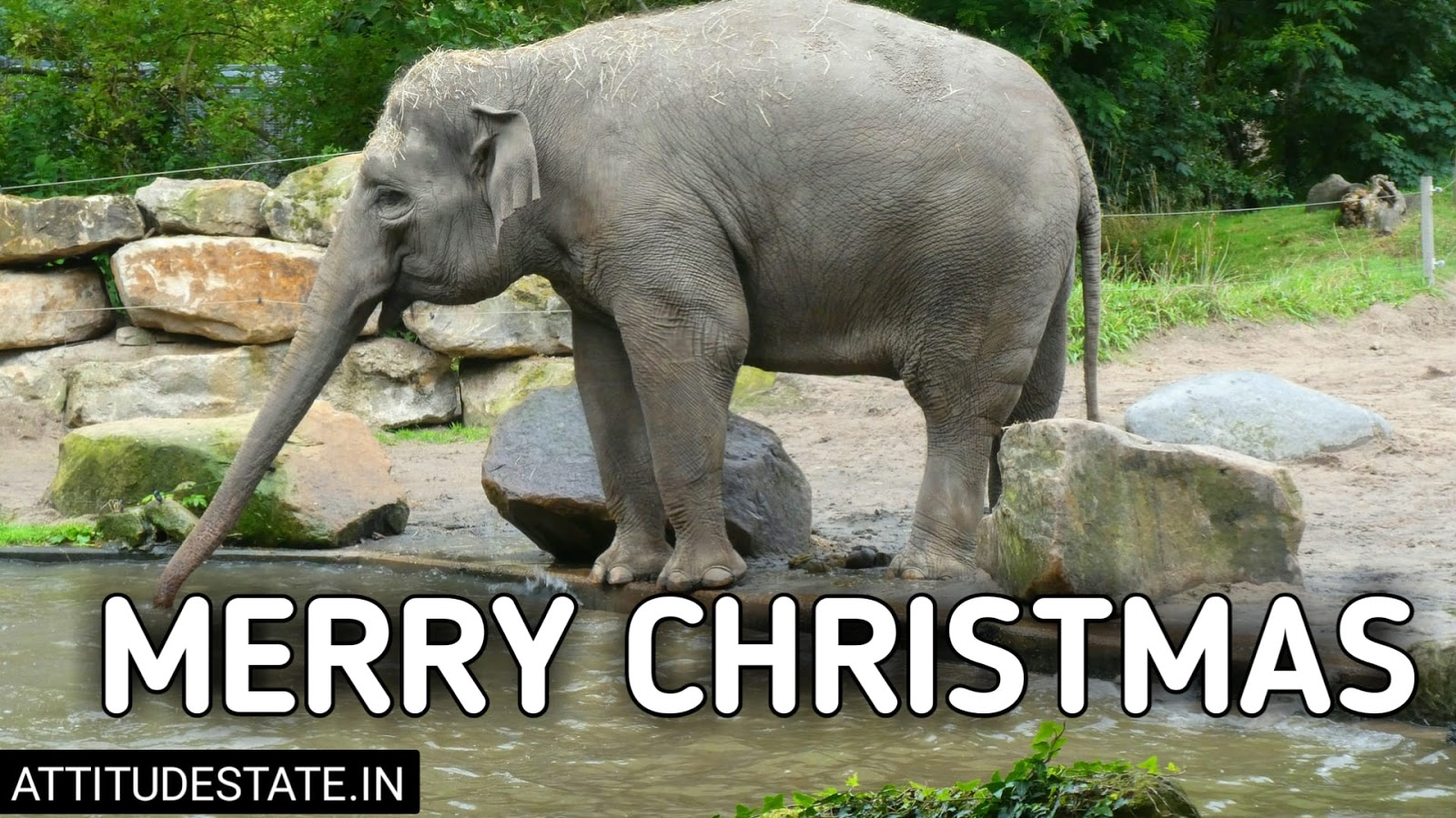 funny merry christmas images free