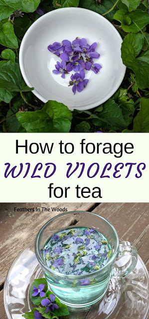 Wild violet flowers & a cup of violet tea