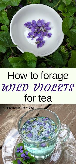 Wild violet flowers & a cup of violet tea