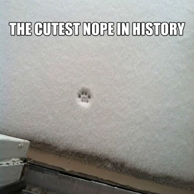 The Cutest Nope In History - single cat paw print in the snow