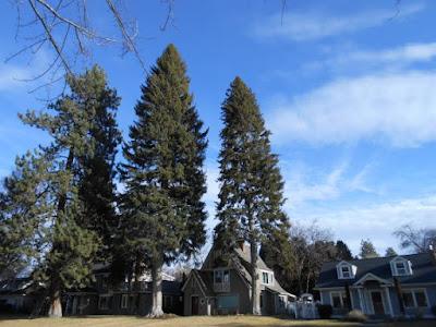 trees, homes, blue sky
