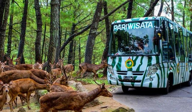 Melihat Dari Dekat Satwa Liar Di Taman Safari Prigen
