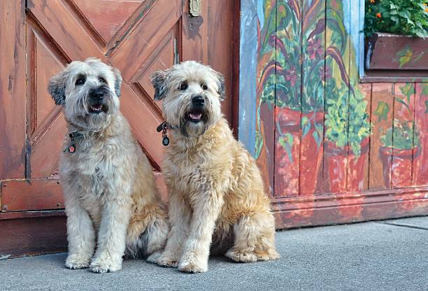 Hypoallergenic Dogs – Some Popular Choices