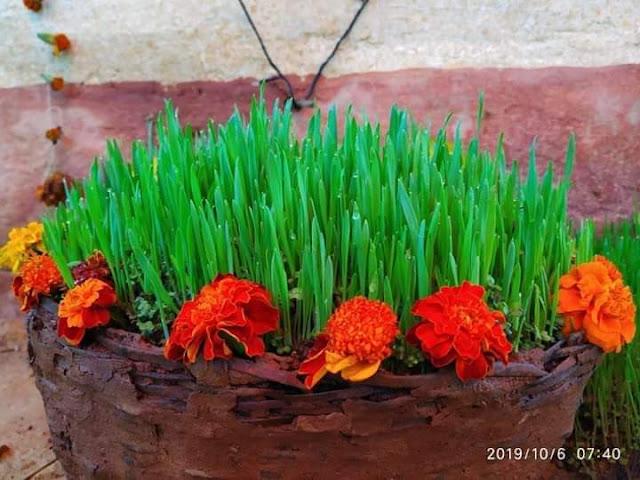 Harela-Festival of Uttarakhand
