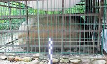Ternyata di Sidrap ada Situs Batu Tedong dan Struktur Makam Pammase Tau