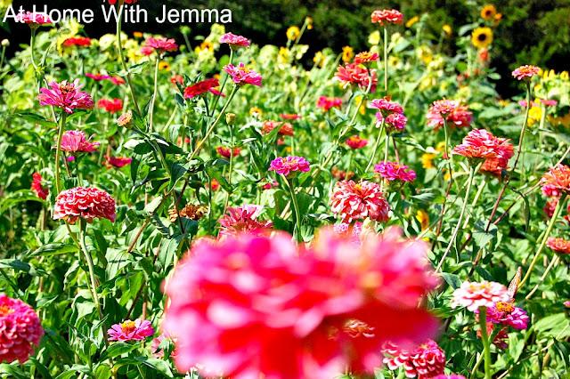 florist, flower, farmer, market, gardener, gardening, bouquets, homegrown, organic, athomewithjemma.com