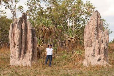Termitero en Australia