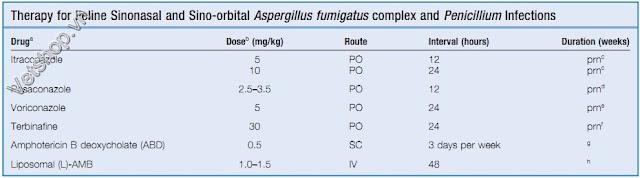 Hình 6: Bảng điều trị bệnh do nấm Aspergillus Và Penicillium trên mèo