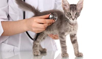 Salud preventiva perros gatos