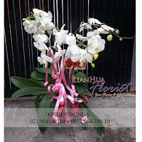 florist dijakarta utara, toko bunga daerah sunter, toko bunga didaerah kembangan, toko bunga dijakarta utara, jual bunga meja anggrek bulan