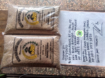 Benih padi yang dibeli SUYONO Way Kanan, Lampung. (Sebelum packing karung ).