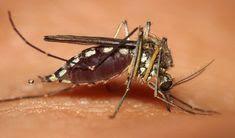 Treatment of Malaria