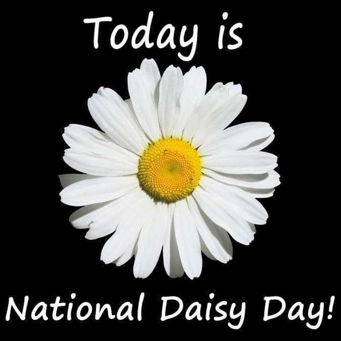 National Daisy Day Wishes Lovely Pics