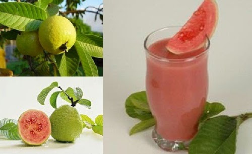 Efficacy Of Guava For Dengue Fever Sufferers