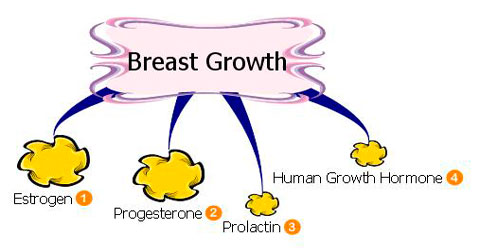 Grow Breasts Naturally Food