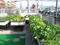 半坪畑の野菜