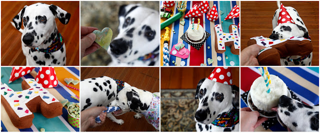 Collage of Dalmatian dogs having fun at a dog birthday party