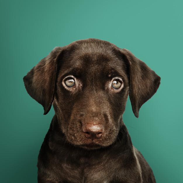 Variedade: Cachorro Chorando  Veja algumas motivações