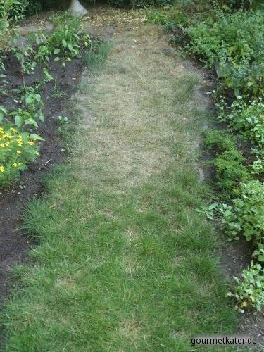 Dürre-Schaden im Rasen