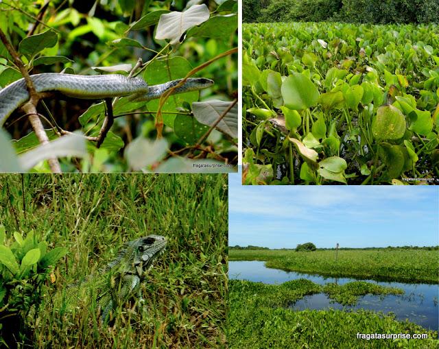 Fauna e flora do Pantanal do Mato Grosso
