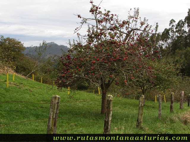 Ruta de los Molinos del Rio Profundo: Manzano
