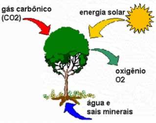 Ciências Fotossíntese 4º Ano Hora De Colorir