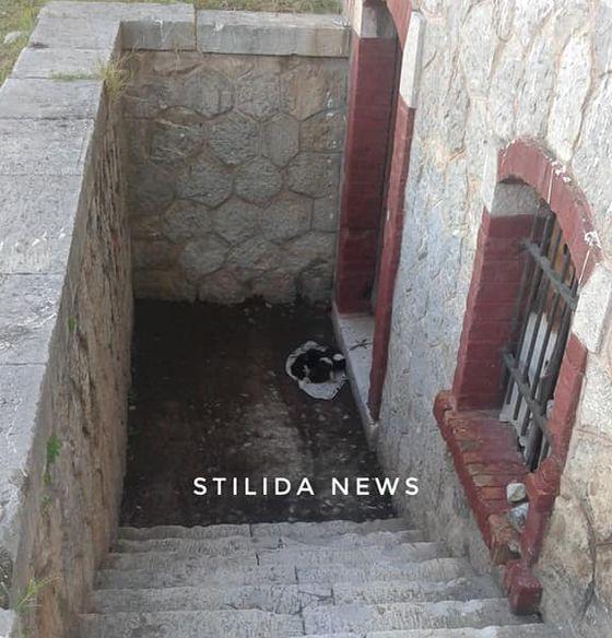 Στυλίδα 5 Νοεμβρίου 2019 - Αυτά τα 5 κουταβάκια είναι εγκαταλελειμμένα στο κτίριο του ΟΣΕ (Φώτο & Βίντεο)