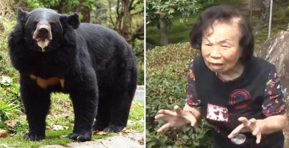 Asian Black Bear, Rumiko Sasaki