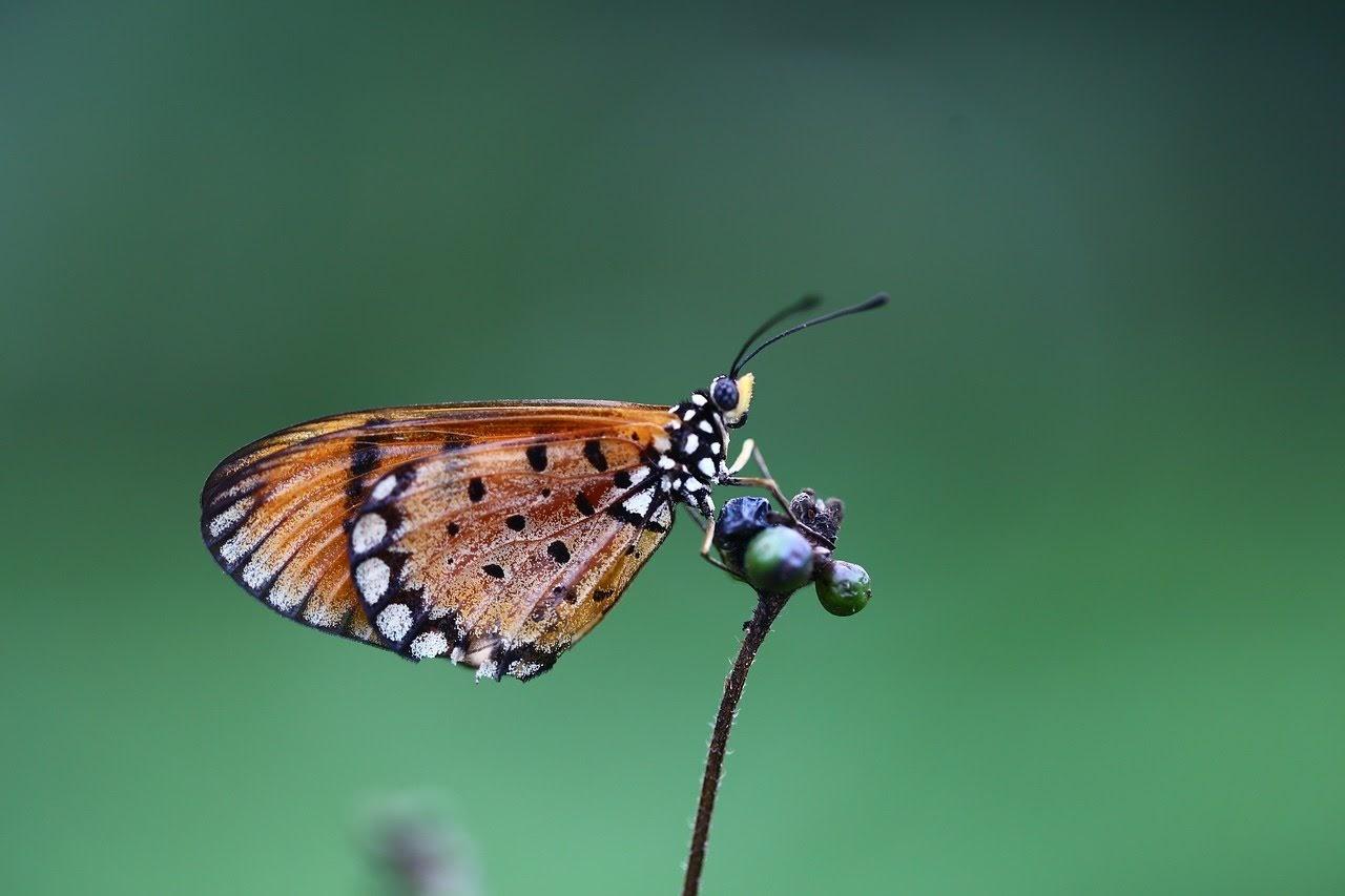 صورة فراشة صغيرة فوق النباتات - اجمل واحلى صور الطبيعة الجميلة والخلابة في العالم