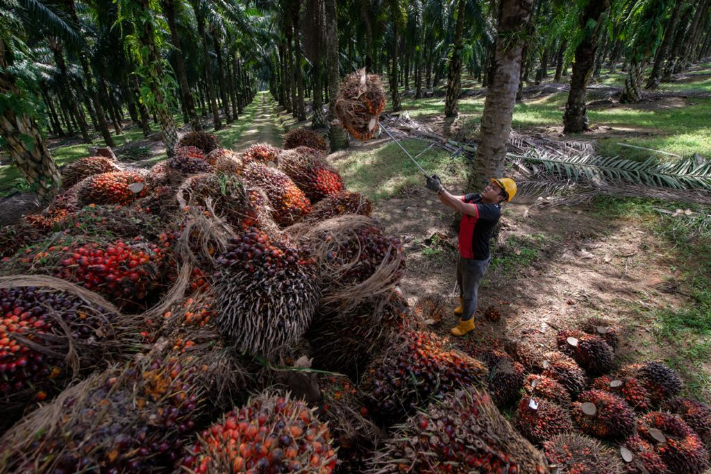 KULIM (MALAYSIA) BERHAD RAI ULANG TAHUN KE-88, BAKAL PENERAJU AGRIBISNES MENJELANG 2025