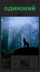 в лесу на опушке стоит одинокий волк и воет подняв голову