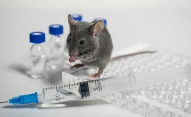 Benda Dan Hewan Yang Bisa Mengusir Tikus