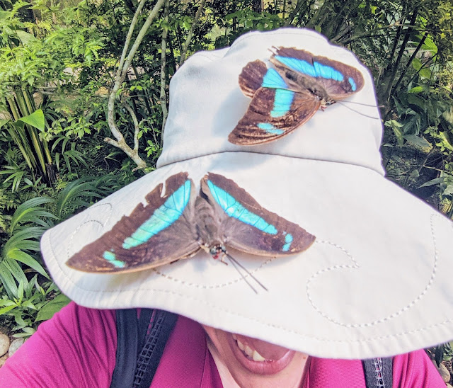 Visiting the Costa Rica Butterfly Conservancy