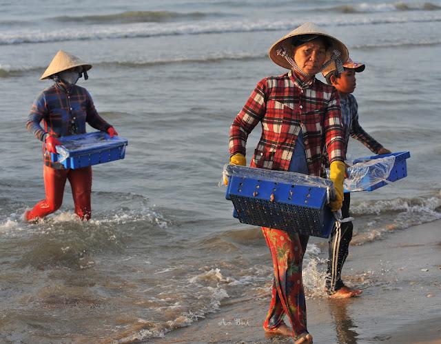 Tải cá vào bờ